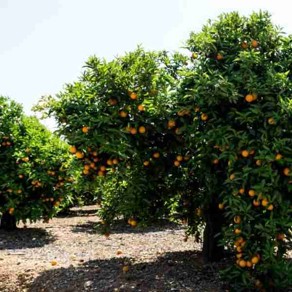 Huerta de NaranjasLU