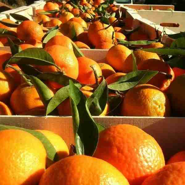 Productos de la huerta de NaranjasLU